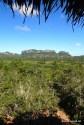 Viniales - wspaniała zieleń i wspaniałe widoki