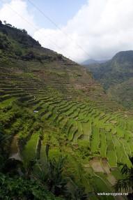 Tarasy ryżowe w Batad