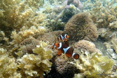 Snorklowanie na rafach El Nido pozostawia wspaniałe wspomnienia