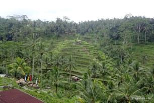 Bali Pola ryżowe